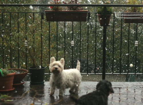 first-snow-fall2012