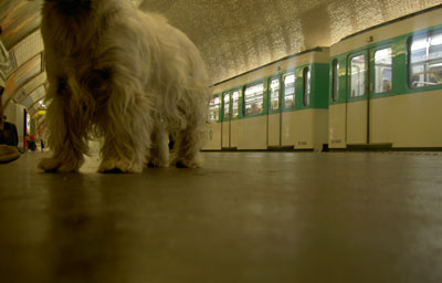 maddie_metro1