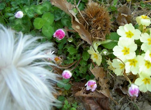 maddie_springflowers