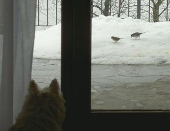 maddie_watching_birds