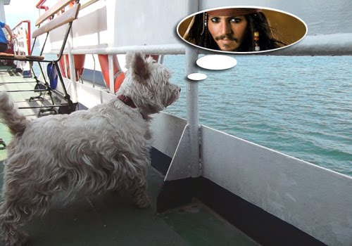Westie-on-deck