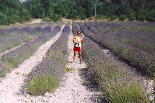 Provence 2003