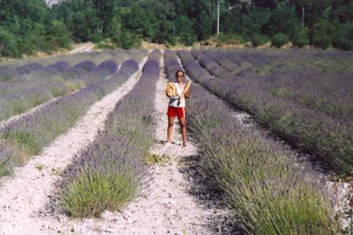 Provence 2003