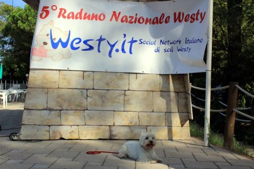 Raduno Westy