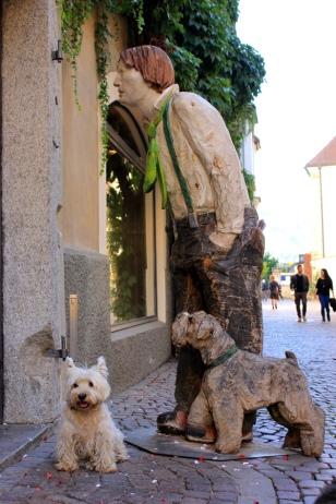 Westie in Bressanone