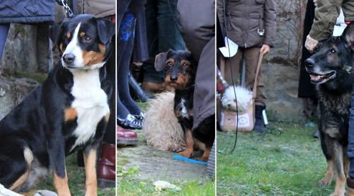Sant'Antonio Abate dogs