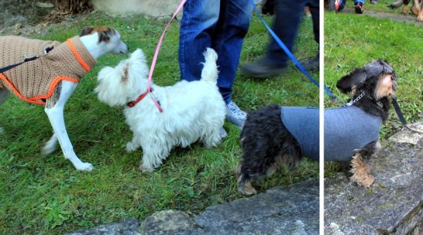 Sant'Antonio Abate dog blessing