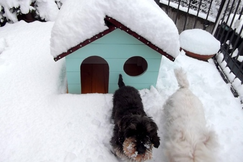 Big Snow February 2015 dogs
