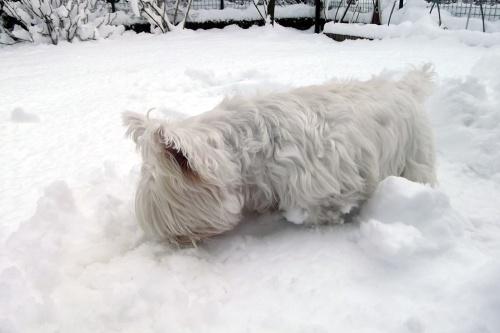 Big Snow February 2015 Maddie