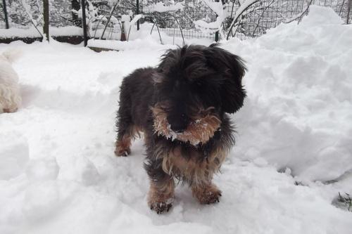 Big Snow February 2015 Mister B