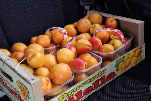 8 kilos of apricots