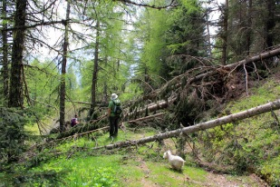 Blocked trail after Forte Saccarana