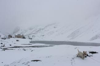 June snow at Flüelapass