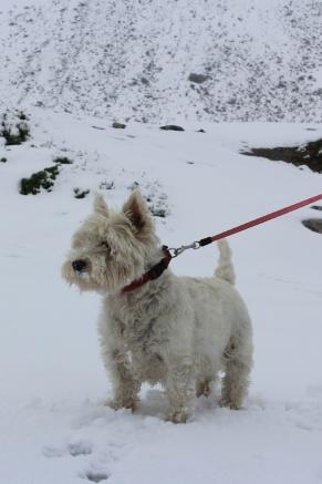 It's snowing in June!