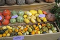 Pumpkin EXPO