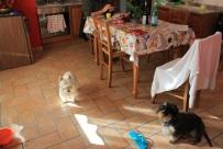 Doggies welcome at La Mezzaluna fra Le Mura.