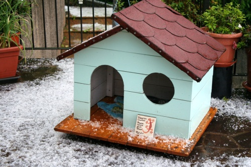 Hail on doghouse