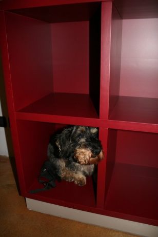 Mister B hiding out in Barolo