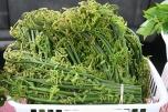 Pohole (edible fern shoots)
