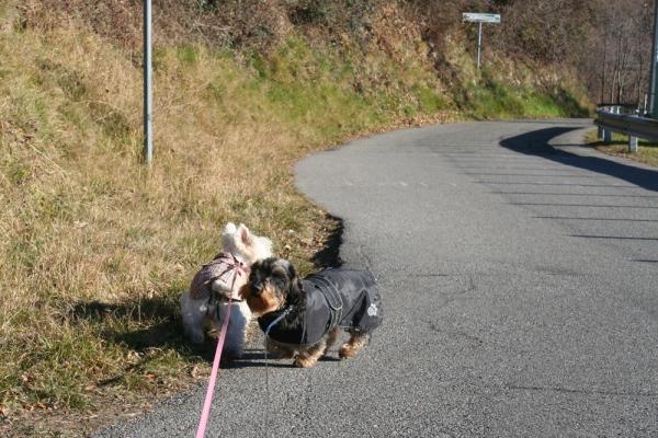 Dogs last walk of 2016