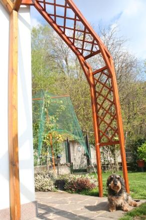 New trellis for grapevine